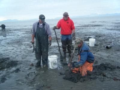 seafood in Alaska, razor clams, Alaskan seafood