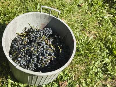 Etruscan Coast wine, Etruscan Coast wine route, Tuscan Abby, Tuscan wine, Tuscany