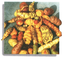 Andean tubers, olluco and oca